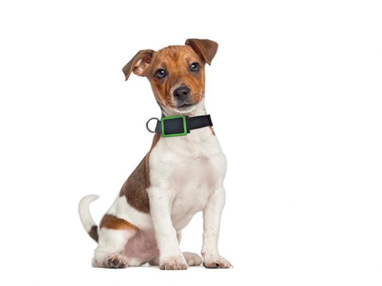 grande remise procédés de teinture minutieux acheter pas cher Colliers GPS pour chien : un marché de niche